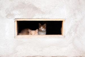 Die Tür für die Katze im Kellerfenster